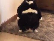 Weirdest Looking Fat Cat