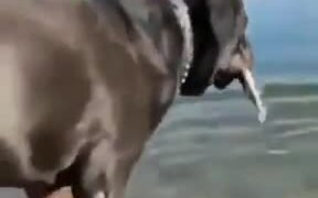 A Dog That Can Catch Fishes