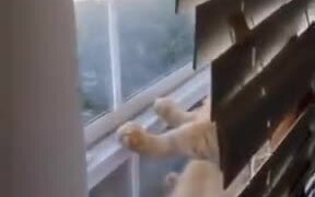 Moped Cat On The Window Hanging Out