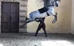 Majestic Andalusian Horse