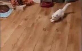 Tango Between A Cat And Dog