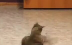 Even Cats Chase Their Own Tail