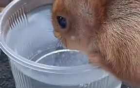 Human Sharing Food And Water With Squirrel