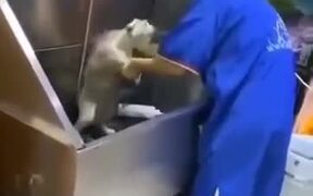 Funny Resistance Of Cat Getting A Bath