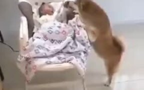 Dog Taking Care Of A Crying Baby