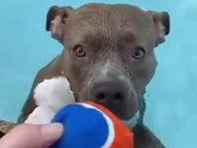 Dog Playing Fetch In The Pool