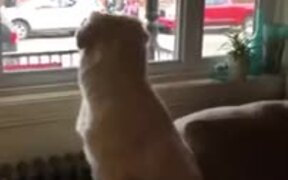 Dog Eagerly Waiting For Kids To Come Home