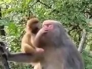 Monkey Child Kissing His Mother