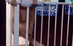Struggle Of A Poor Fat Cat