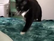 This Cat Plays Fetch