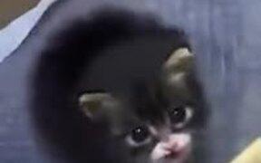 Just A Chonky Loud Kitten