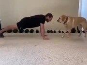 A Dog As An Exercise Partner