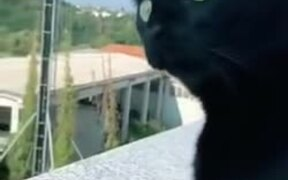 Cat Eagerly Listening To Screaming Neighbor