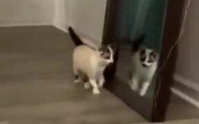 A Catfighting Itself