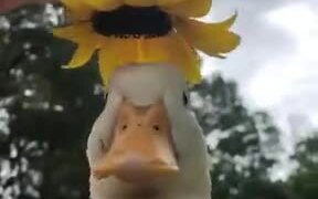 A Duck Wearing A Special Hat
