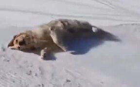Ever Seen A Dog Sledding Video?