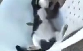 Cat Hilariously Sleeping On A Chair
