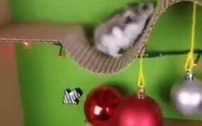 Christmas Themed Guinea Pig Course