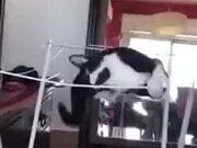 Hilarious Fall Of A Cat