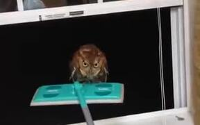 Most Intense Owl Situation