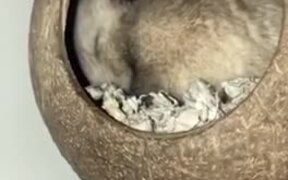 Cute Hamster In A Coconut Shell