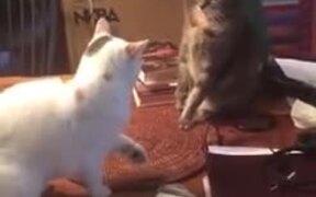 Surprise Cat Attack