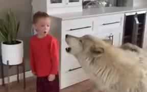 Kid Howls, Dog Howls, Everyone Howls!