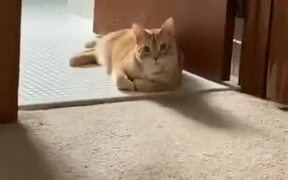 Cat Does A Sneak Attack!
