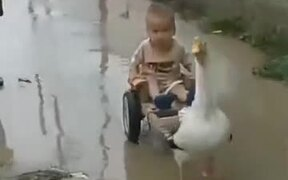 Hitching A Ride On Goose-Drawn Cart