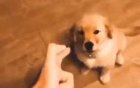 Puppy Gets 'Shot' And Plays Dead