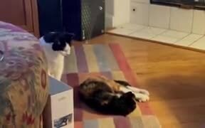 Proof That Cats Truly Are Evil!