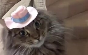 Cat Did Not Like The Hat