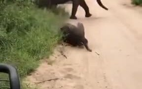Cute Baby Elephant Plays Around Of Safari Visitors