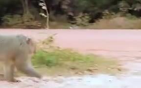 Monkey Literally Just Got A Heart Attack