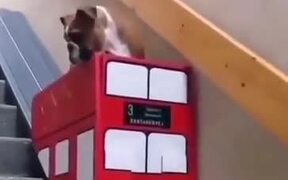 Owner Builds Bus Lift For Dog With Arthritis