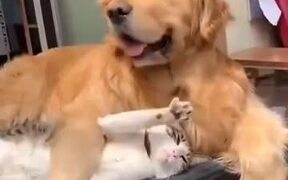Cat And Dog Act Just Like Lovers!