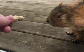 Hand Feeding A Squirrel In The Yard