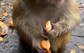 Monkey's Eating Habits Are Better Than Most Humans
