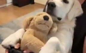 A Perfect Dog For Gamers