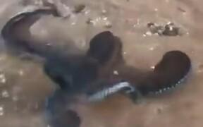 A Spitting Octopus