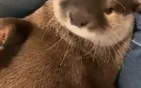 Otter Gets Grumpy And Makes Noises