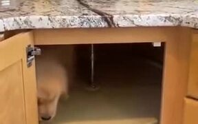A Puppy Trapping Kitchen Drawer