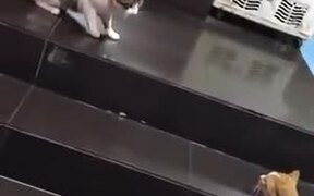 Dog Drags Away Cat From A Fight