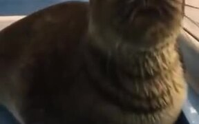 Is That A Real Sea Lion?
