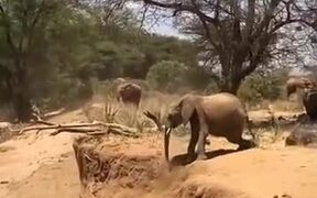 Baby Elephant Learning To Cross River Bank
