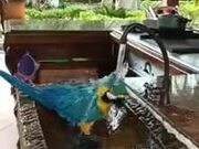 Intelligent Domestic Parrot