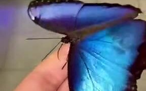 A Gorgeous Blue Butterfly