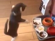 When The Cat Is Too Happy To Touch The Food