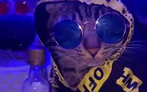 Hip Hop Cats With Disco Box