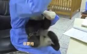 Panda Babies Require A Lot Of Love